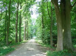 Voor mij een bekend beeld, een landgoed in de kop van Drenthe. Bron: Gouwenaar Creative Common.